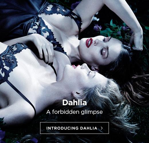 Dahlia - a forbidden glimpse