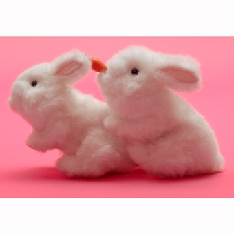 Lovehoney TV Ad Rabbits