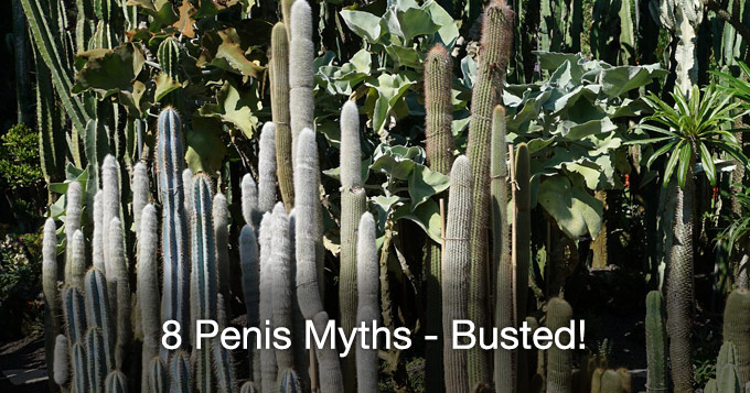 8 penis myths - busted!